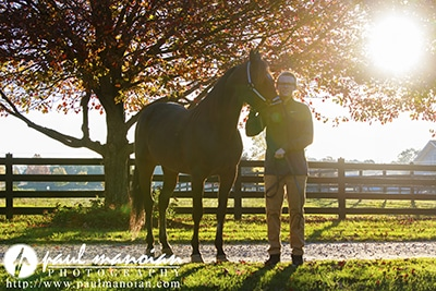 Senior Pictures with Horses - Hillsdale Photographers